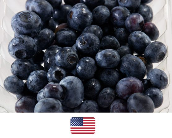 ผลไม้-บลูเบอรี่อเมริกา2
