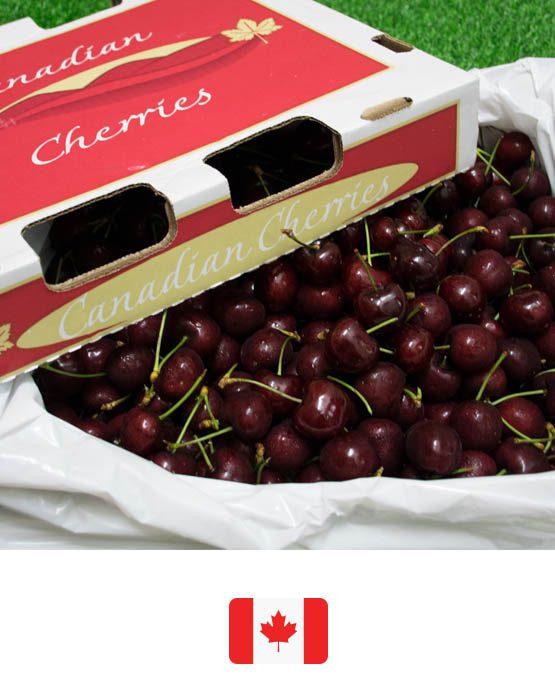 ผลไม้สด-Cherry-can_F