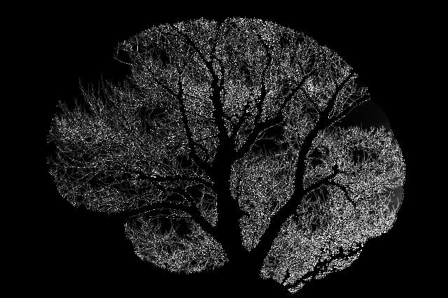 ผลไม้-เบอรี่-สมอง
