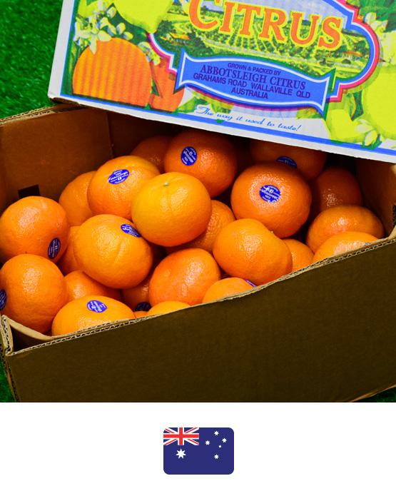ส้มแมนดาริน-ออสเตรเลีย2