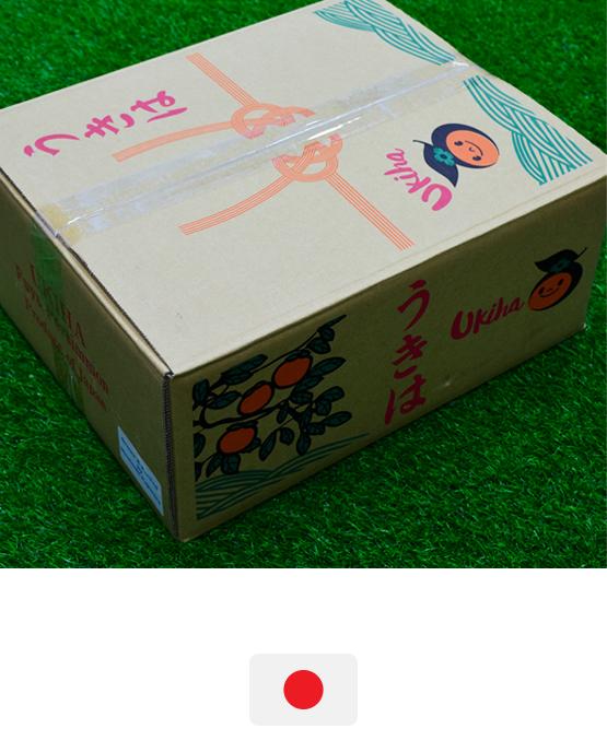 พลับ-ญี่ปุ่น-ขายส่ง-ผลไม้