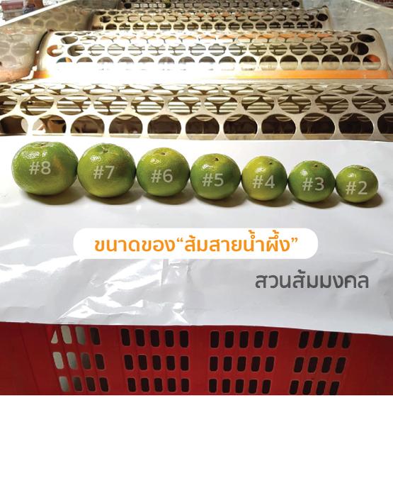 ส้มสายน้ำผึ้งขายส่ง ฝาง เชียงใหม่ ออนไลน์5